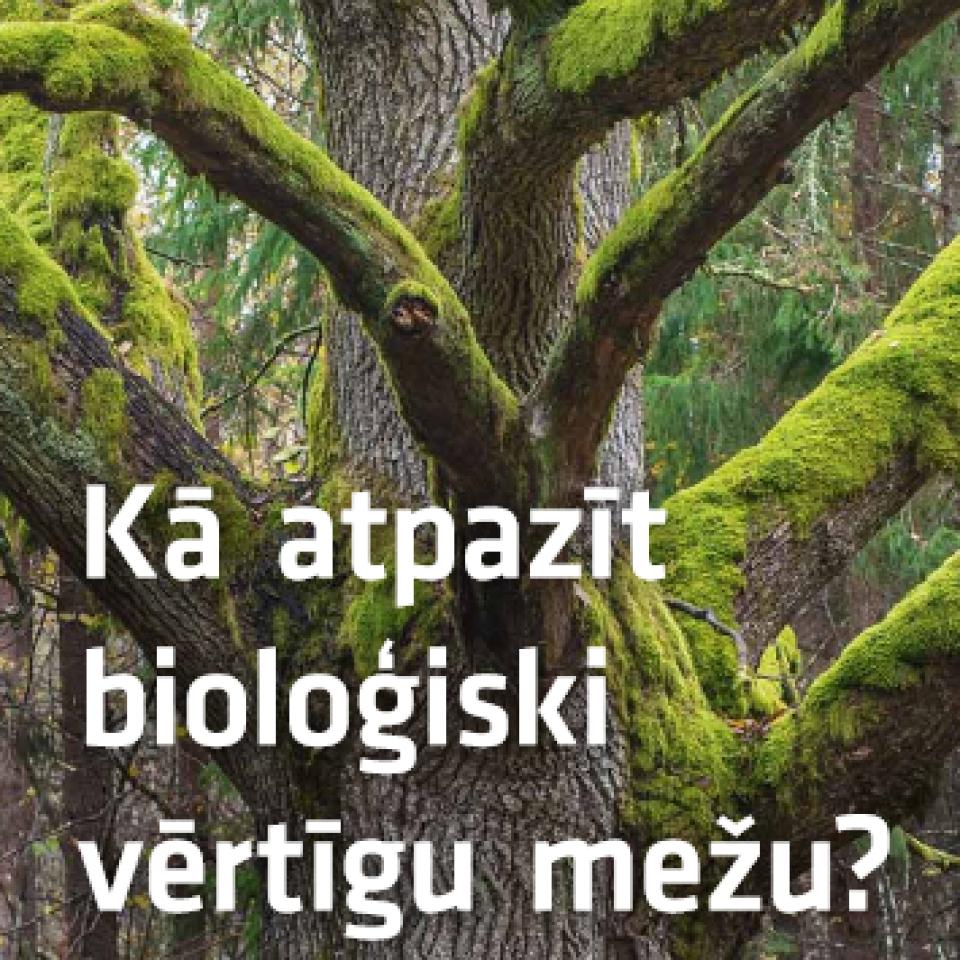 Kā atpazīt bioloģiski vērtīgu mežu